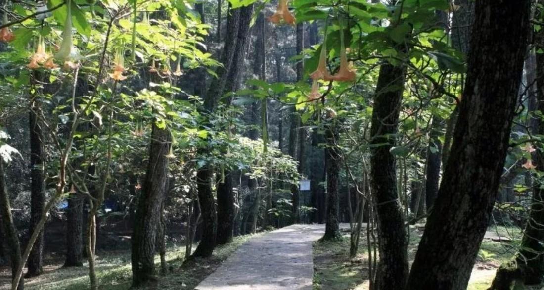 Keindahan Taman Hutan Raya Juanda Bandung