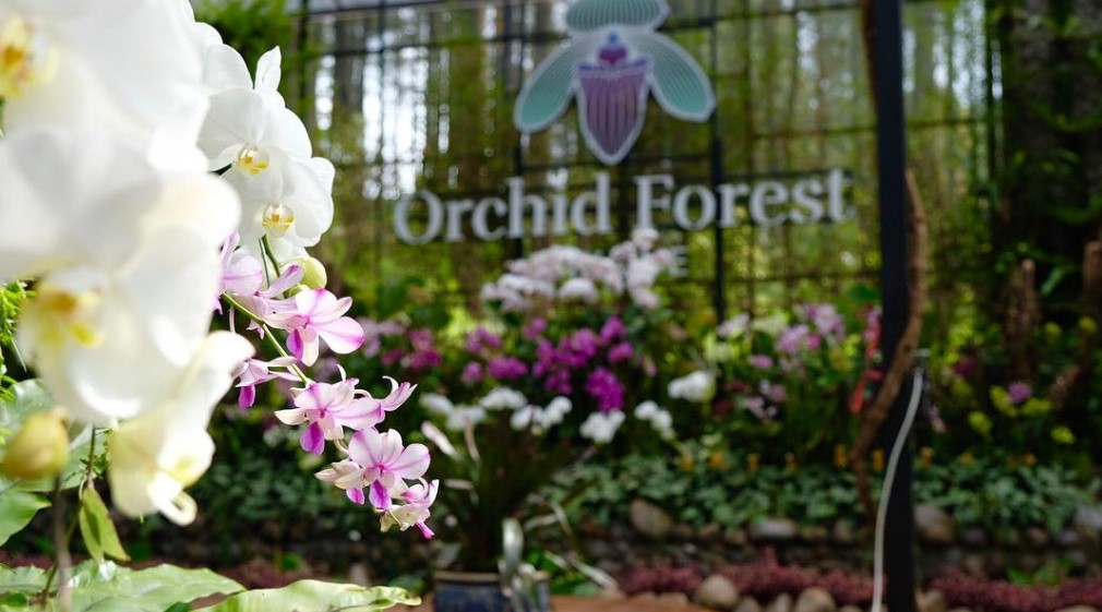 Orchid Forest Coffee Corner Lembang